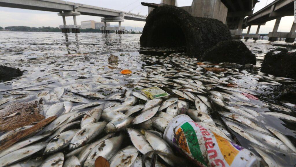 Sonar para observação e monitoramento da vida aquática